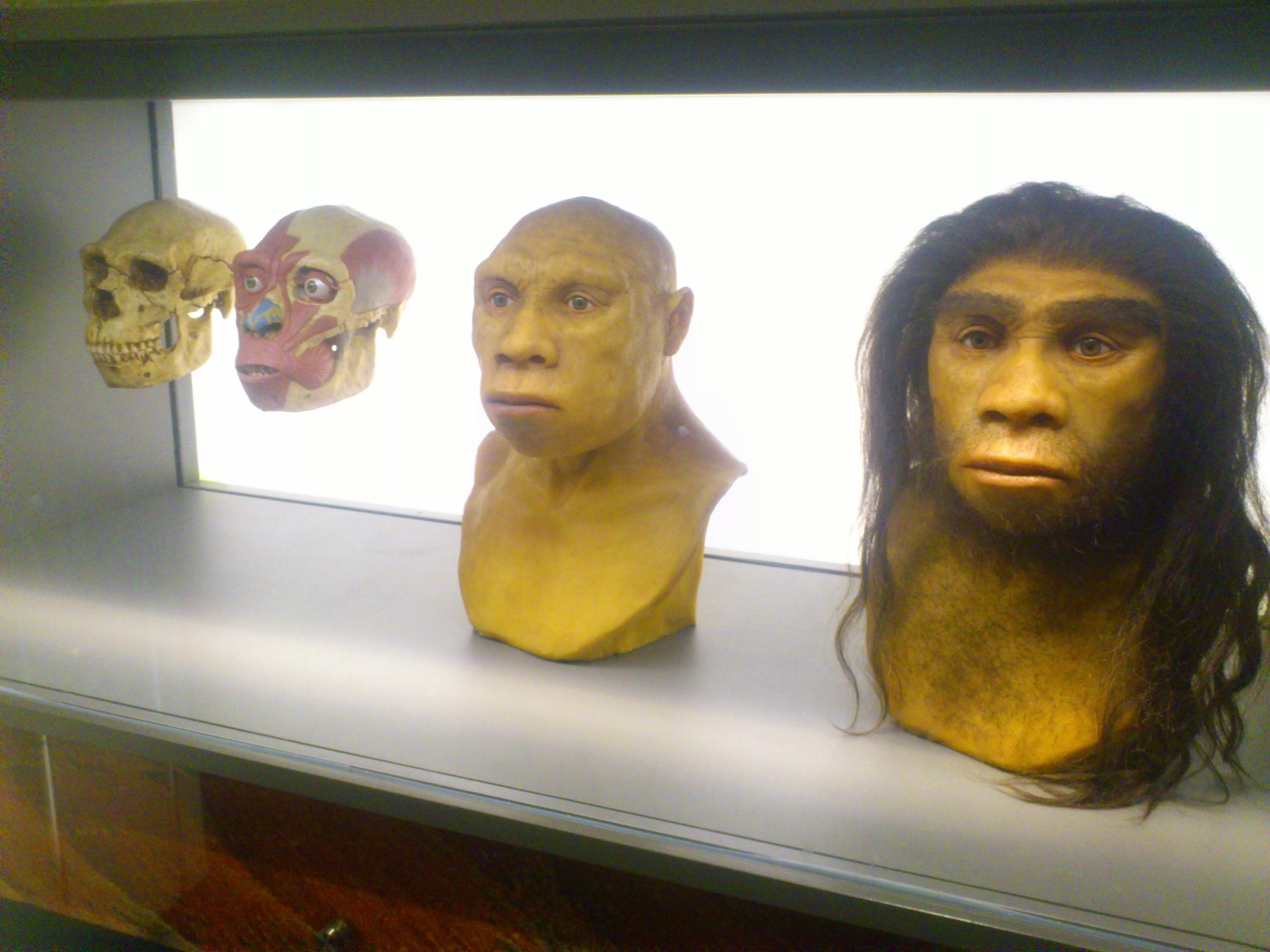 American Museum of Natural History © Andréa Haug